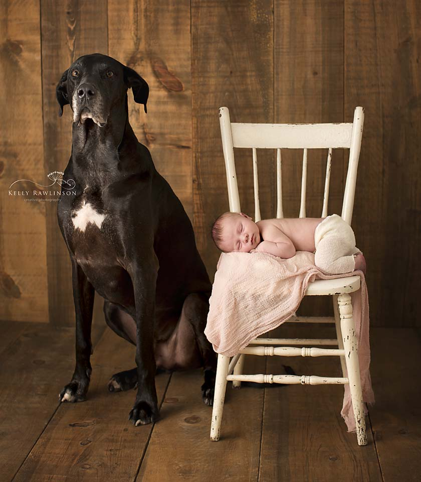 Newborn and Great Dane