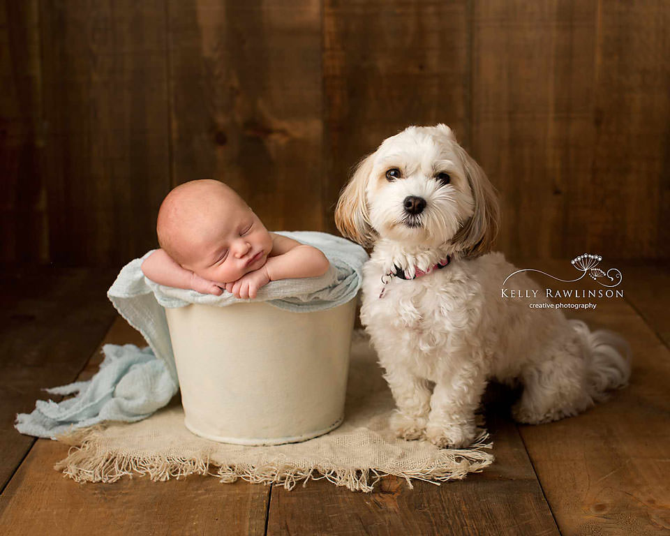 Newborn baby and Havanese
