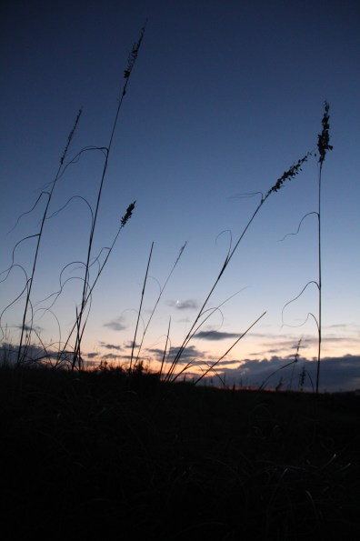 Watching the sunrise across the tall dunes