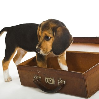 About Pet Friendly Motels And Pet Hotels