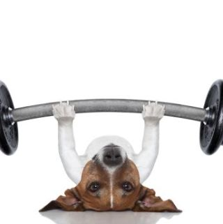 The best way to ensure your dog is getting the right amount of exercise