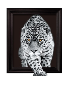 3D Art Lenticular Pictures #the3dartcompany