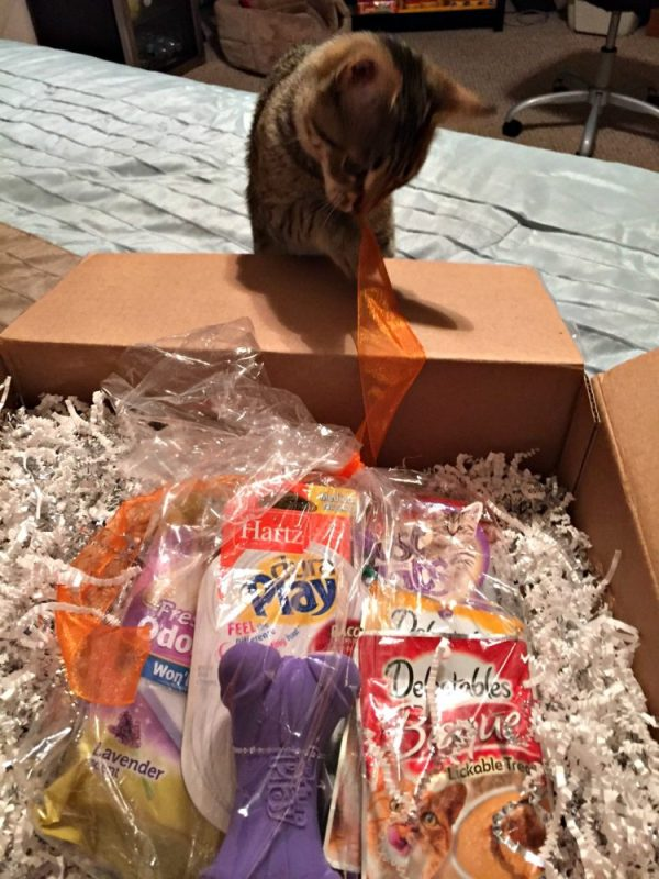 Surprise Your Pets With A Special Delivery Care Package