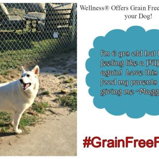Wellness® OffersGrain Free Solutions for your Dog #GrainFreeForMe