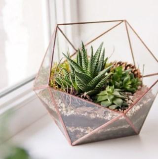 5 Ways to Incorporate Plant Life into Minimalist Home Interior Design