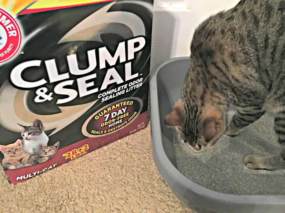 How To Get An Odor Free Home- Happy Home=Happy Cat