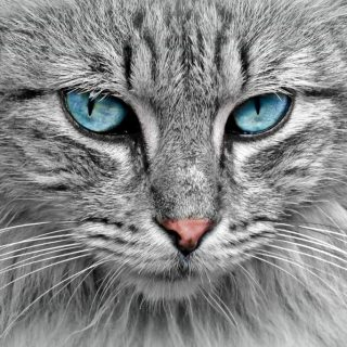 5 Times Cats Proved That They Can be Better Pets Than Dogs
