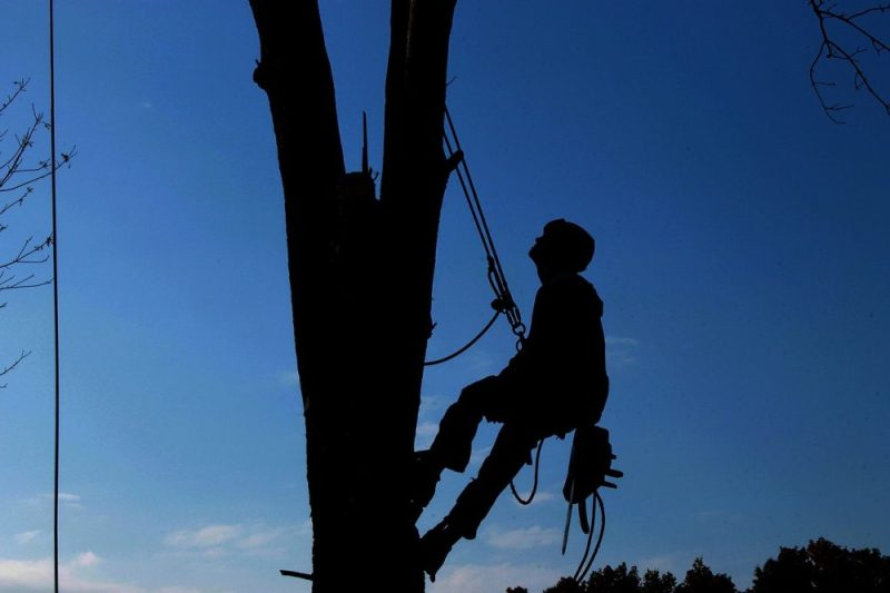 Top 3 Tree Services Available From the Leading Tree Care Companies