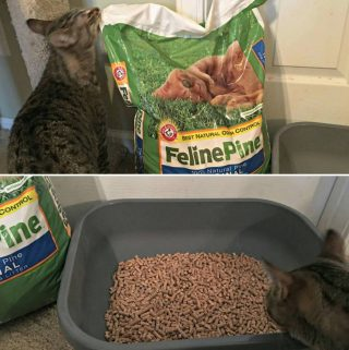 Feline Pine™ Original NON-CLUMPING Cat Litter (Coupon and Giveaway)