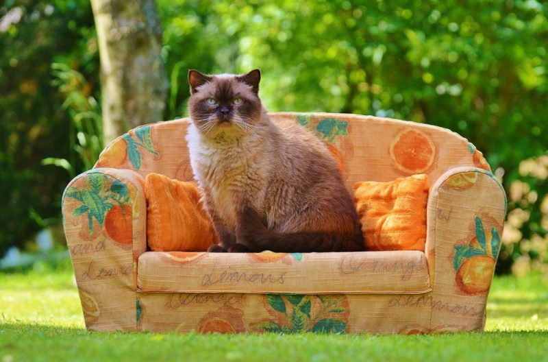 Making Your Home Cat-Friendly