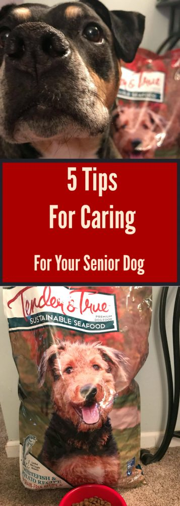 5 Tips For Caring For Your Senior Dog