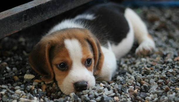 Puppies are a Gift that Keeps Giving for Loving Families
