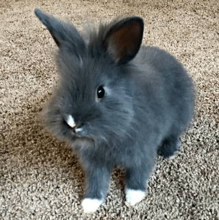 Buying a Rabbit: Must-Have Items You Will Need