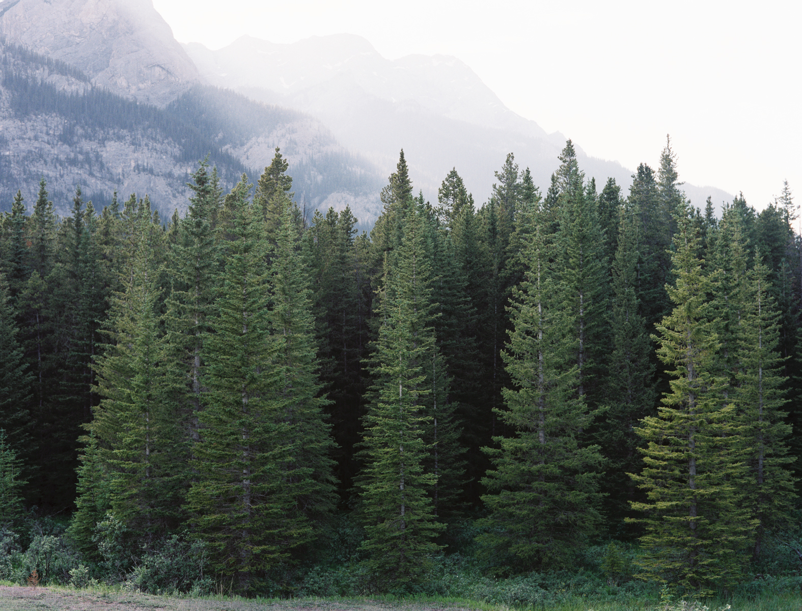 Norway Spruce Seeds Look