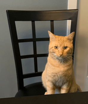 Orange tabby cat on a chair