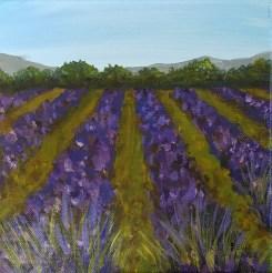 Lavender 1