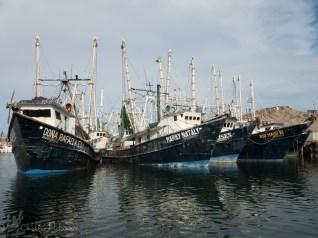 Shrimp Boats in the harbor