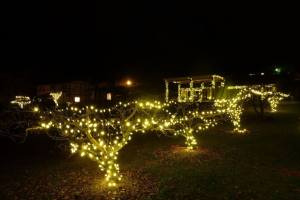Kelowna Fall Activities - Light Up the Vines