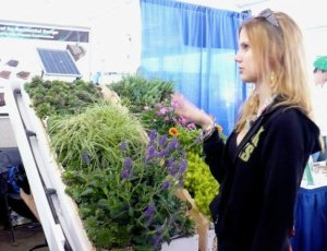 Exploring Green Roof Technology
