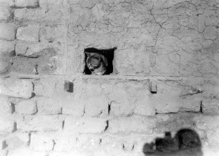 645: The cats at the camp house, during the summer, windows and doors were blocked, leaving a hole for the cat to go in for mice.