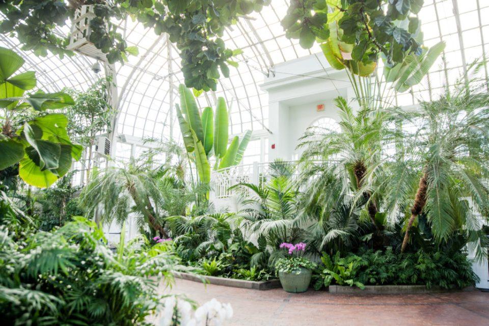 Franklin Park Conservatory Wedding Venue - The John F. Wolfe Palm House