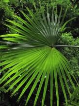 sz-green-2012