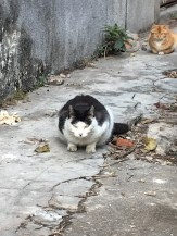 10-two cats