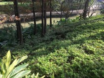 2-zhuangtou park2