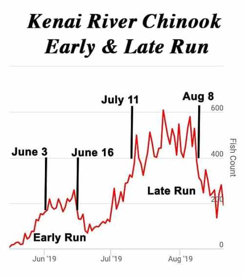 Alaska King Salmon Fishing - A graph showing the best fishing times for the early king salmon run and late king salmon run on the Kenai River