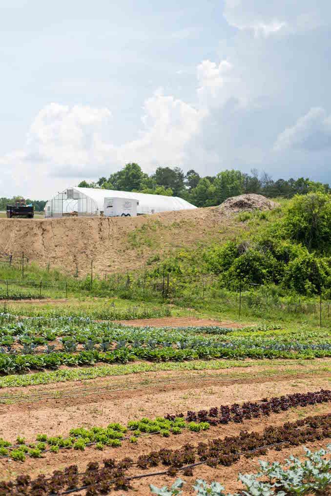 Olivette Farm Asheville Nc Kenan Hill