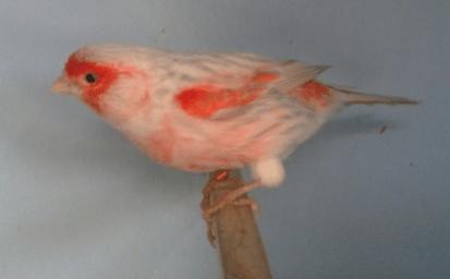 MosaicRedAgateOpalcock
