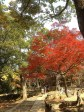 Nara Park Autumn Colors