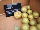 crailing-labels-jargonelle