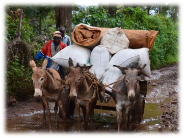 Cheaper and Safer Donkey Transport