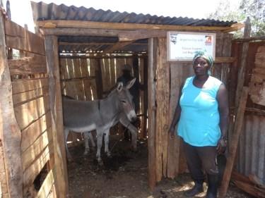 Donkey Protection Shelter in Kiambu_1