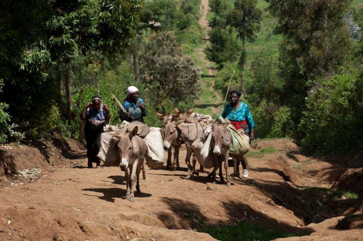 How Donkeys Help Households make money too too