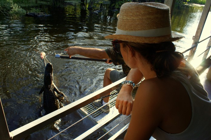 Observing the gators eating chicken. Photo/Rico Cain