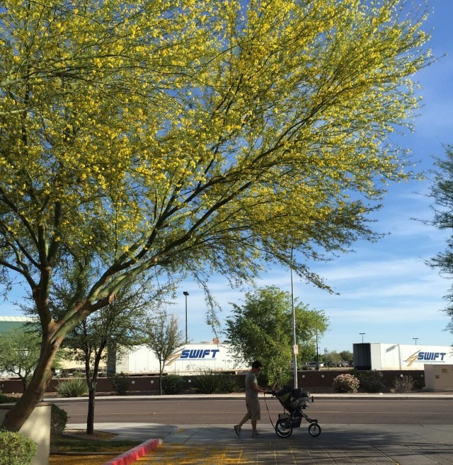 An evening walk in Gilbert, Arizona