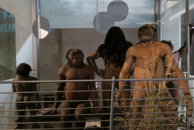 Cradle of Humankind, The Cradle of Humankind – South Africa's Gift to Science Nerds