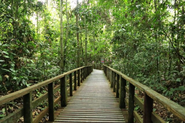 Orangutan Sanctuary