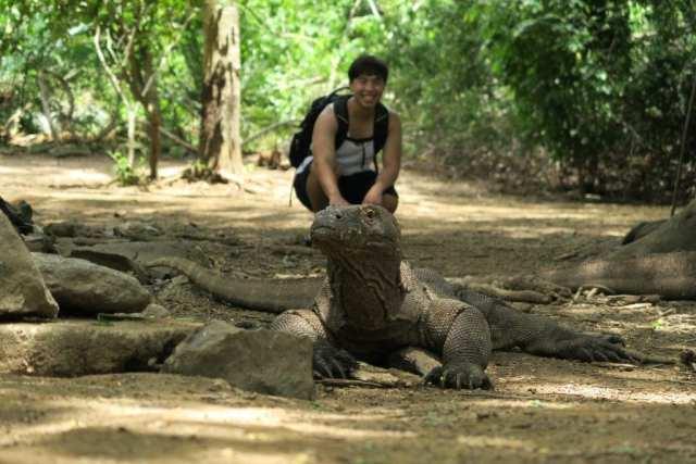 Komodo Dragon Island