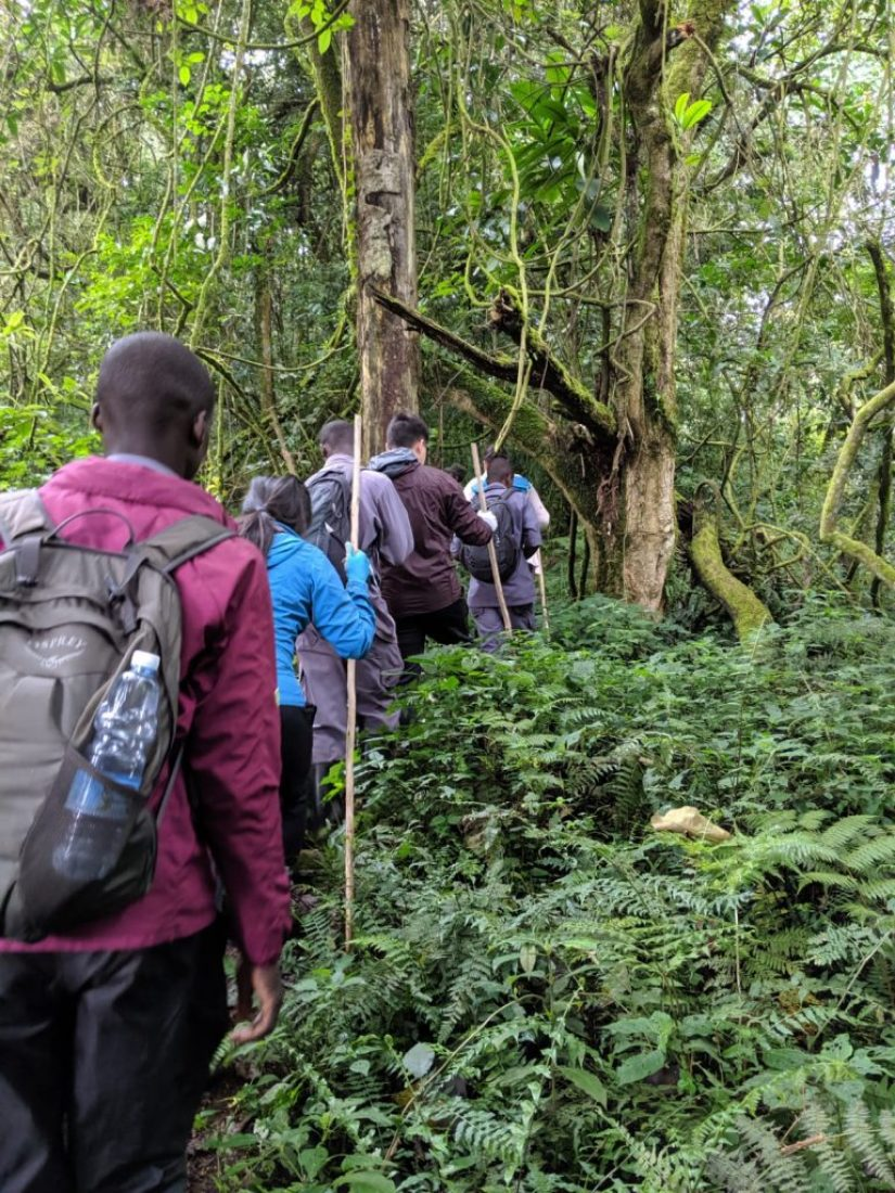 gorilla tracking, Why You Should Train Before Going Gorilla Tracking (Don't Be A Jerk!)