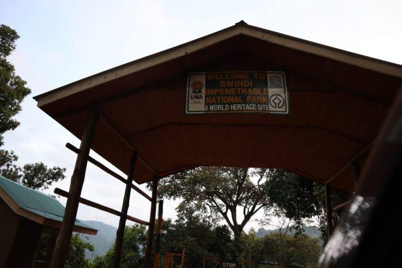 gorilla trekking, How To Go Gorilla Trekking In Uganda (A Comprehensive Guide!)