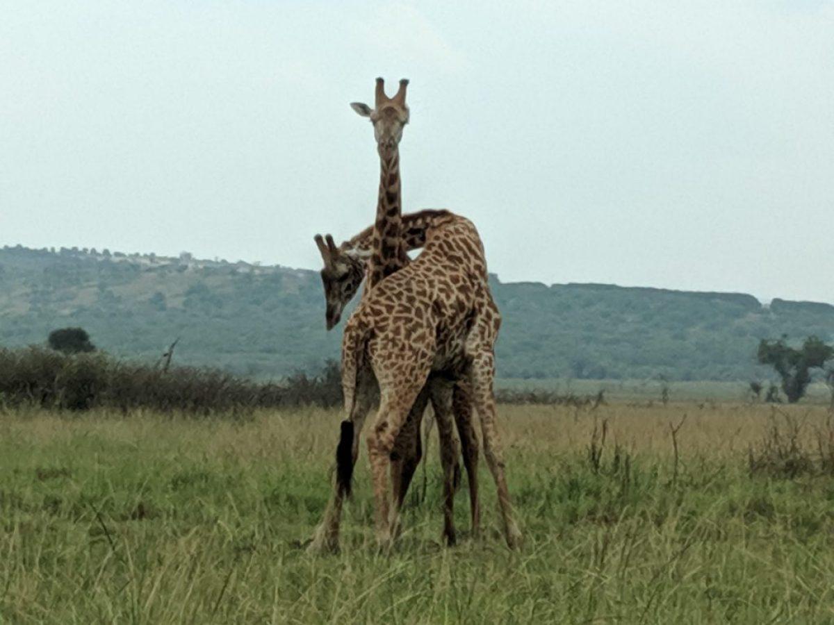 Akagera National Park Safari