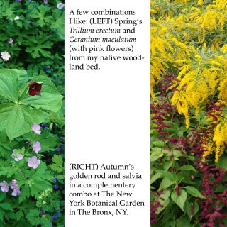 Perennial Combinations with Tom Fischer