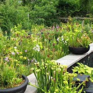 Carnivorous Plant Hybrids with Jason Austin