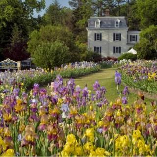 Flowers of the Rainbow – Presby Iris Garden with Linda Sercus