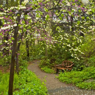 Native Garden in the Woods with Nate McCullin