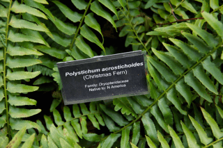 Wave Hill label fern copy