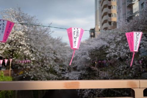 sakura b__12.jpg
